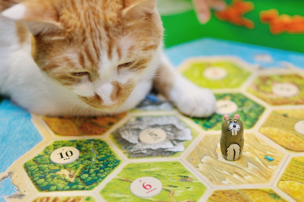 Cat looking at boardgame